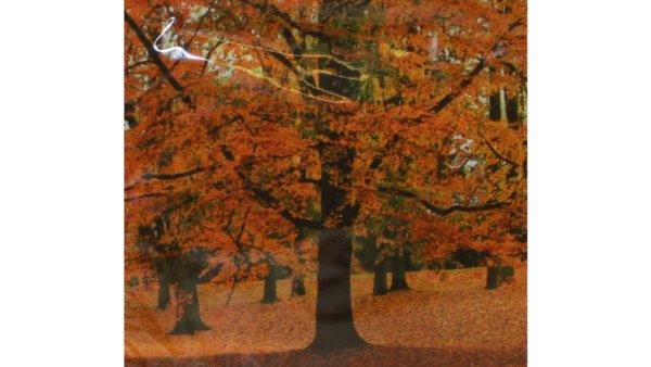 På billedet ser du variationen Frokostserviet. 3-lags. Efterår fra brandet i en størrelse B: 33 cm. L: 33 cm.